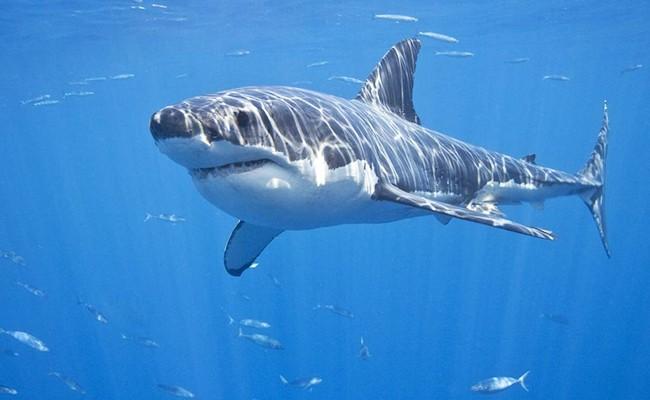 Огромная акула на побережье Малаги
