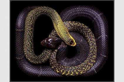 Италия: змеи в искусстве