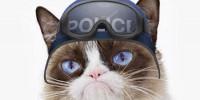 Португалия: кот-«полицейский»