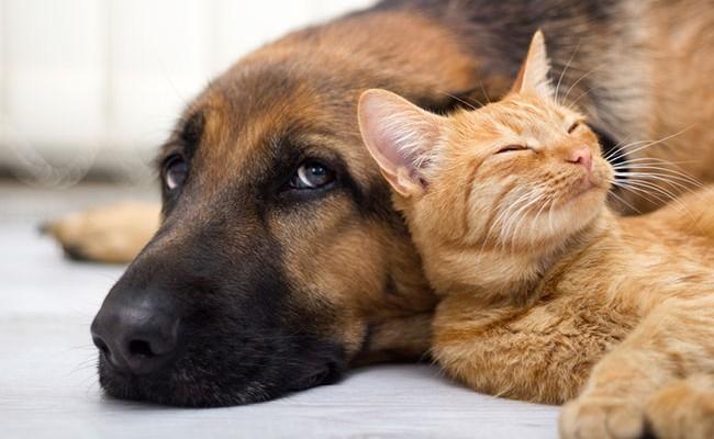 Испания: защита домашних животных