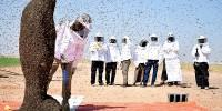 В Саудовской Аравии пчела сорвала мировой рекорд