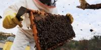 В Португалии входит в моду воровство пчелиных ульев