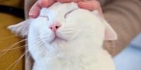 В Петербурге раздадут белых эрмитажных котов