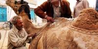 Верблюдов выгнали с конкурса красоты за злоупотребление ботоксом