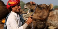 Верблюд откусил голову своему хозяину