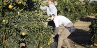 Сельское хозяйство Испании испытывает дефицит рабочей силы