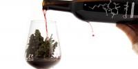 Испания: где попробовать вино с каннабисом?