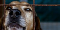 Португалия: зарегистрировано около ста преступлений против животных