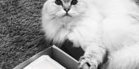 Кошка Лагерфельда представила набор для хорошего сна