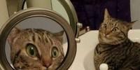 Фото удивленной кошки набирает популярность в сети