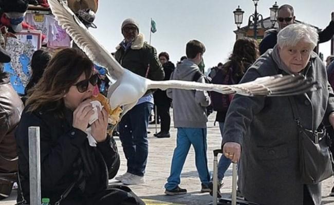 Италия: агрессивные чайки нападают на туристов