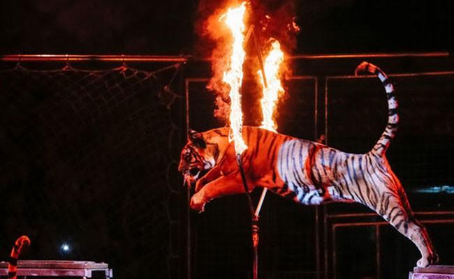 В Италии принят закон о запрете животных в цирке