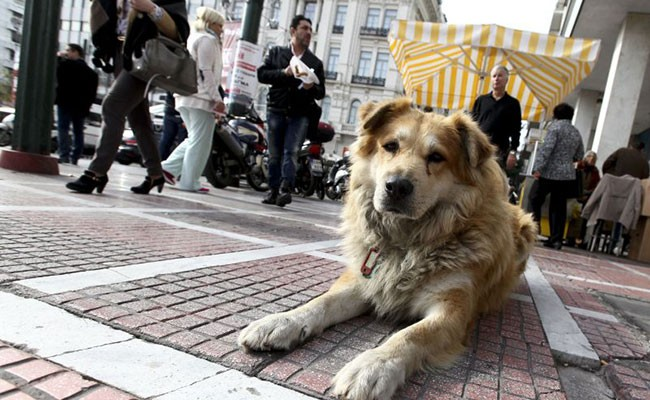 Португалия: в ресторан - с собакой