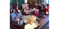 Италия: магазин IKEA открыл свои двери бездомным собакам