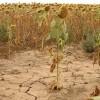 В Италии объявлено чрезвычайное положение из-за засухи