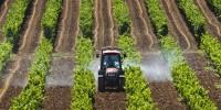 Число аграриев в Испании ежегодно увеличивается на 4%