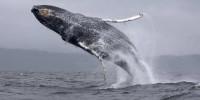 Раскрыта причина появления гигантских морских животных