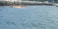 Португалия: возле берега в Сетубале обнаружили тушу кита