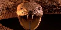 Италия: выставка ядовитых змей в Генуе