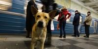 Испания: в метро Мадрида пустят пассажиров с собаками