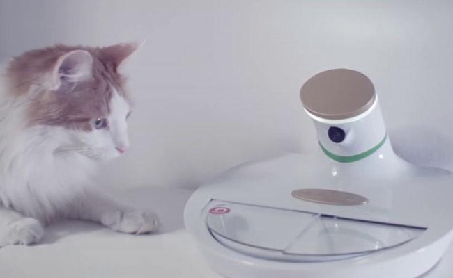 В Италии разработали «умную» миску для домашних животных