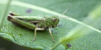 Италия: ученые призвали людей есть насекомых