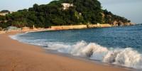 Испания: пляж в Мурсии покрылся мертвыми галатуриями