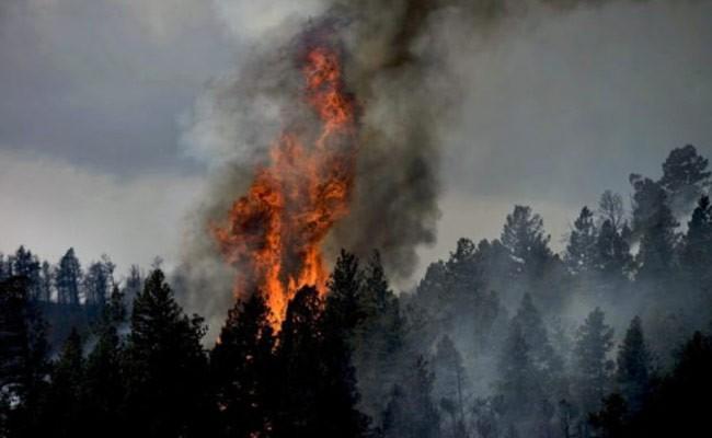 Италия: студенты подожгли лес