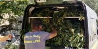 Италия: финансовая гвардия Сицилии изъяла 9 тонн марихуаны