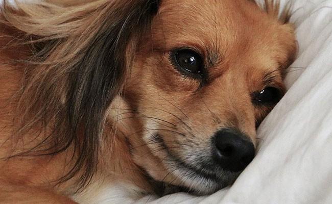 Италия: женщина добилась оплаты больничного по уходу за собакой