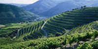 Португалия: стоимость экспортируемого вина растет