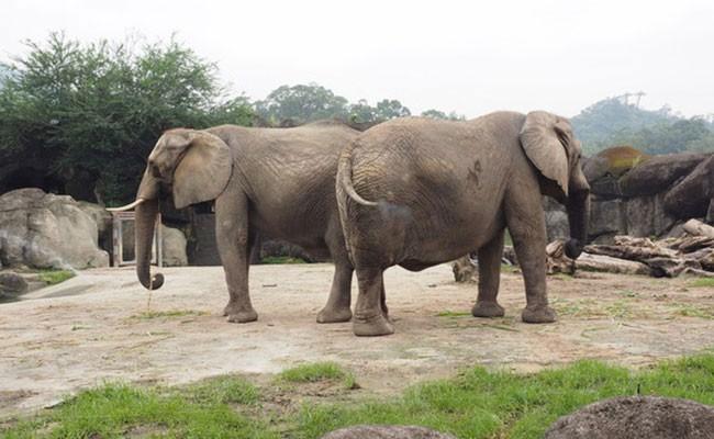 В Замбии слон напал на туристов и растоптал их