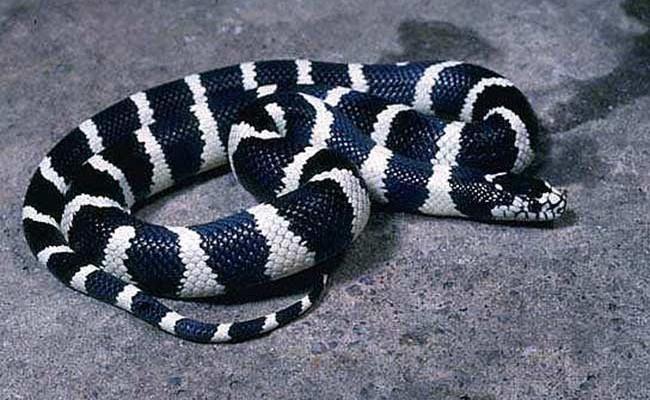 Испания: власти Канарских островов борются с нашествием змей