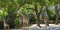 Португалия: день влюбленных в лиссабонском зоопарке